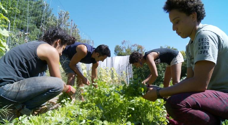 Chasing the Dream: Chasing the Dream: Equitable Food Systems