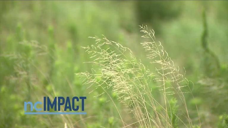 ncIMPACT: Renewable Energy in Rural Areas Promo