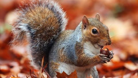 Nature -- A Squirrel's Guide to Success