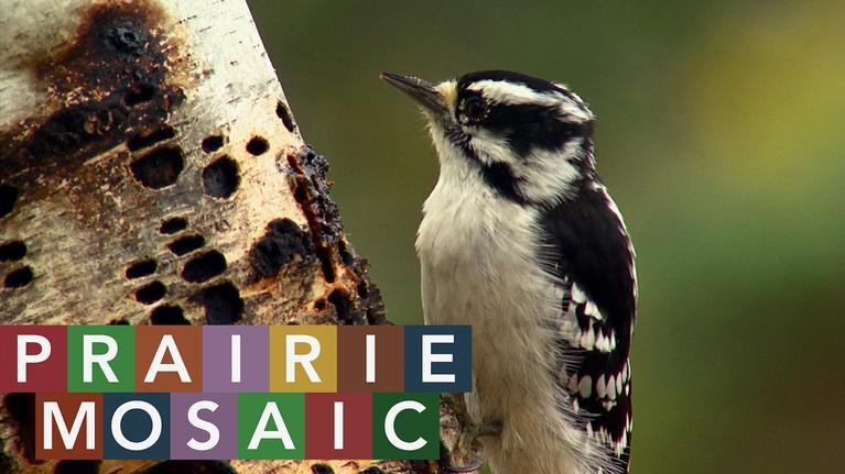 Prairie Mosaic: Prairie Mosaic 1007