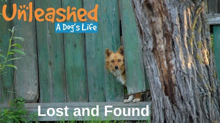Unleashed: A Dog's Life: Lost and Found