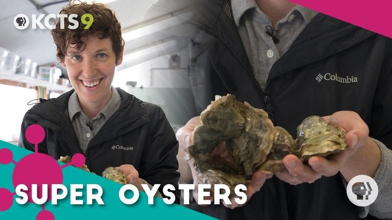 ReInventors: Can these super oysters survive our screwed-up oceans?