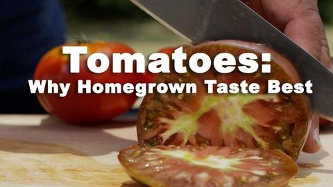 Nourish -- Tomatoes: Why Homegrown Taste Better