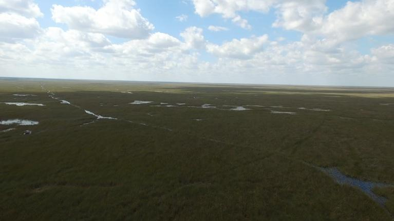 Battleground Everglades: Survival at Stake