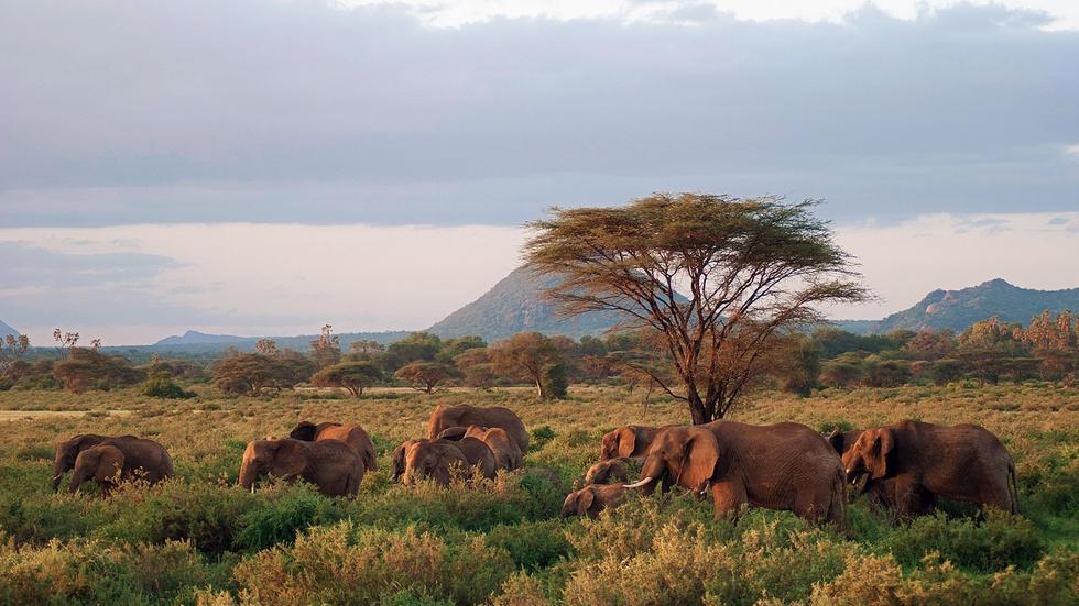 Next on Episode 1 | Elephants image