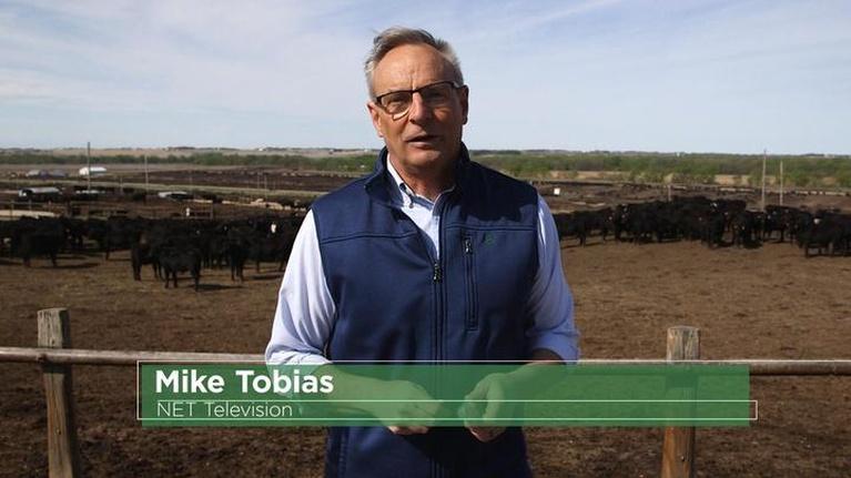 NET Nebraska Presents: What If...Cattle Fitbit, Med School Tech, Workplace Culture