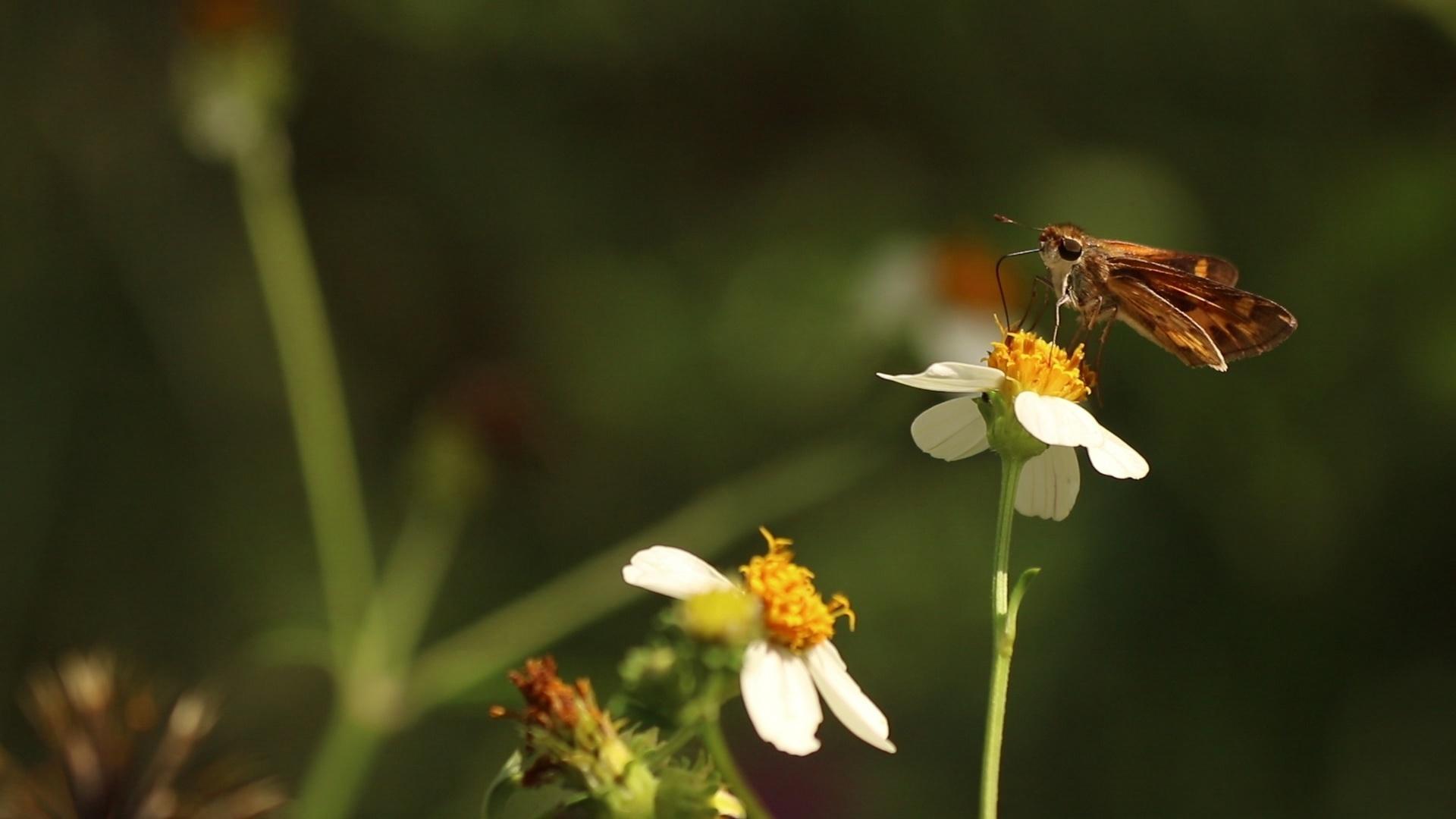 Enhancing Pollinator Habitat at Lake Elberta