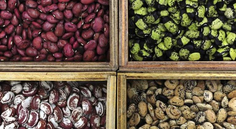 Farm to Fork Wyoming: Seed Savers