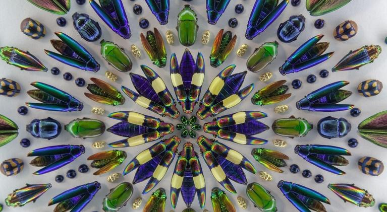 Oregon Art Beat: Season 21, Episode 5: Circle of Life