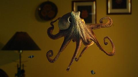 Nature -- Octopus: Making Contact Preview