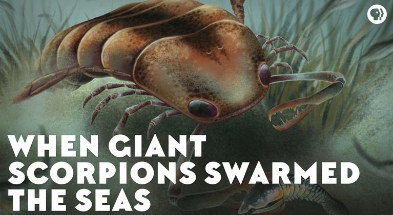 Eons: When Giant Scorpions Swarmed the Seas