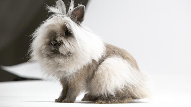 Remarkable Rabbits