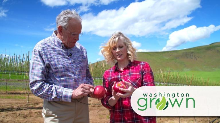 Washington Grown: All about Apples