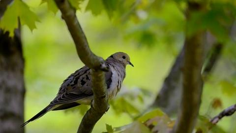 Nature -- Citizen Science Story: Celebrate Urban Birds