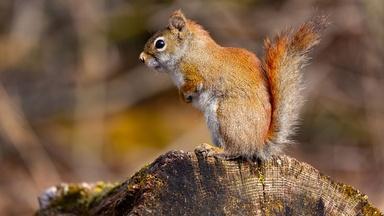 Garden Drama: Fighting Squirrels