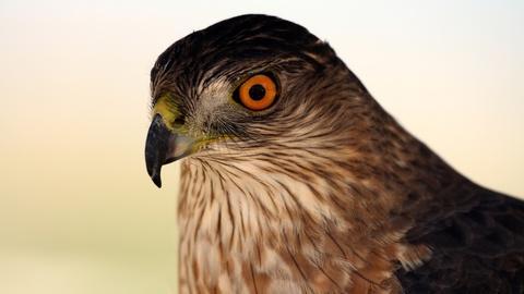 Autumnwatch New England -- Hawk Migration