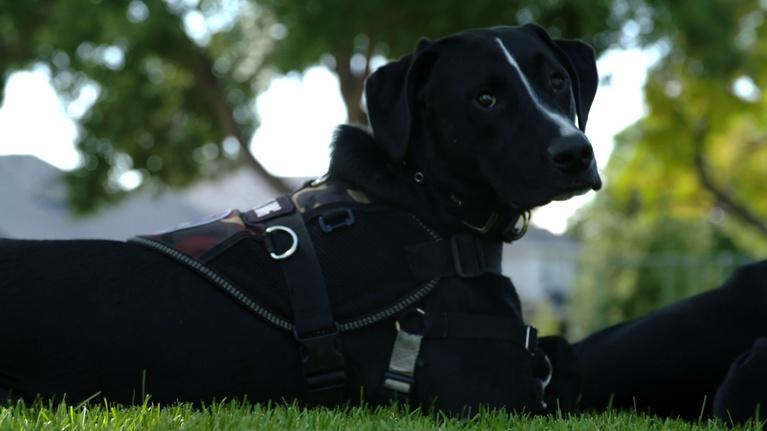 CPT12 Presents: Freedom Service Dogs