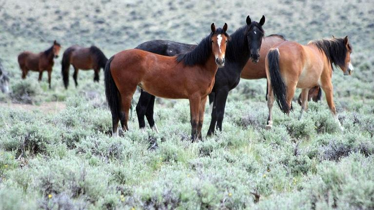 Outdoor Idaho: Home on the Range