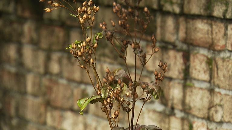 Lakewold Gardens: Spring Garden Preparation