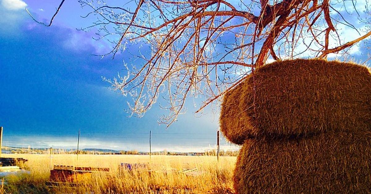 Restoration Farming in Cody | Farm to Fork Wyoming | PBS