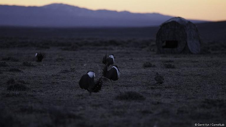 Wyoming Perspectives: Sage Grouse Special