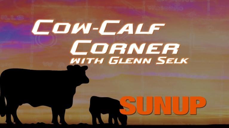 SUNUP: Colostrum and the Health of Newborn Calves