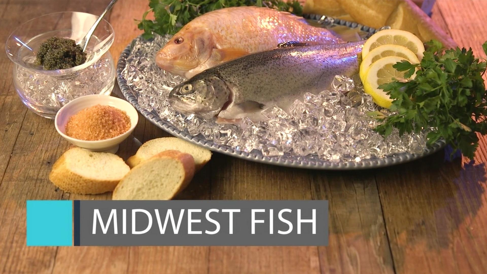 Midwest fish feast tv pbs for Fishing the midwest