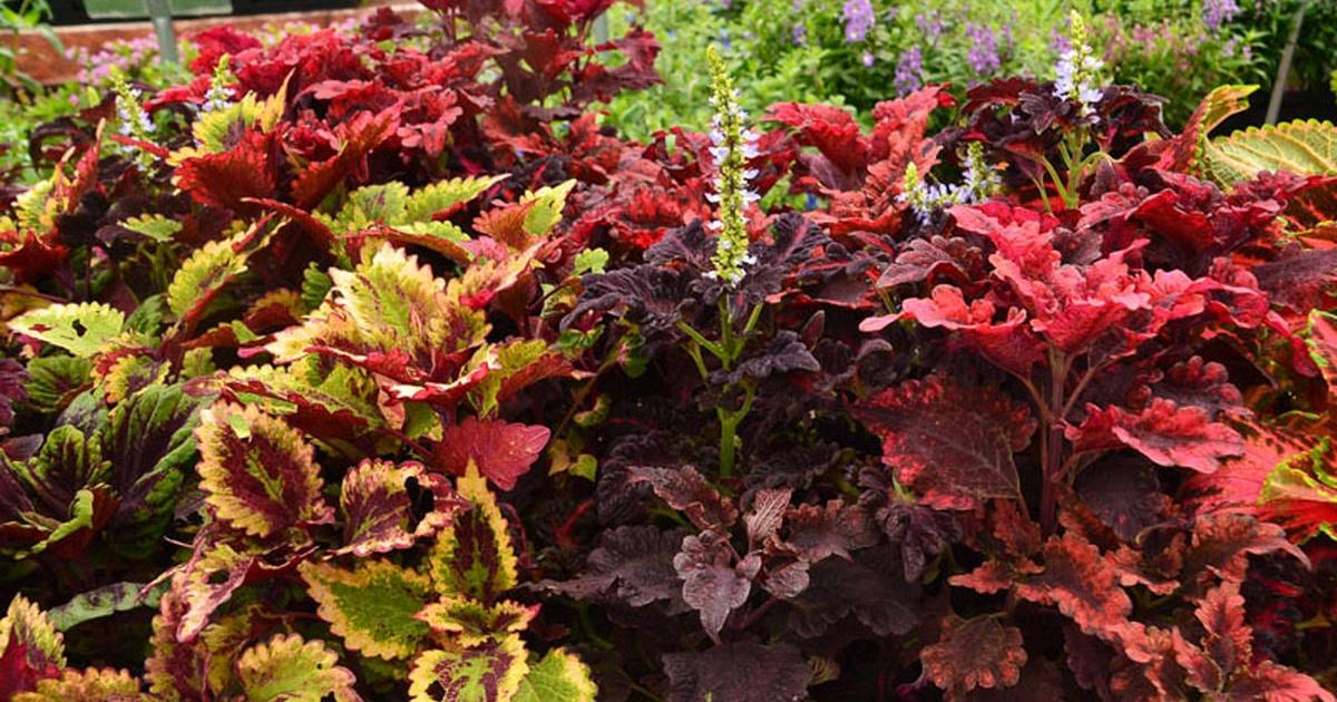 Gravel In The Garden Good Bad Ugly Central Texas Gardener Pbs