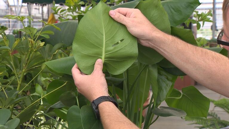 Backyard Farmer: Backyard Farmer: Moving Plants Indoors for Winter