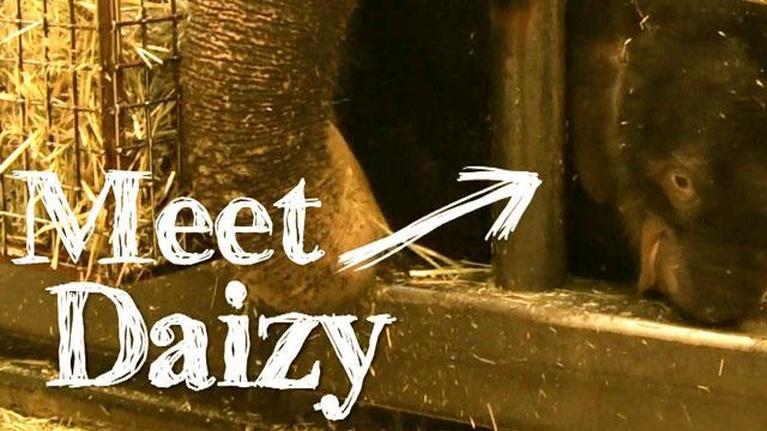 Webisodes: Meet Daizy