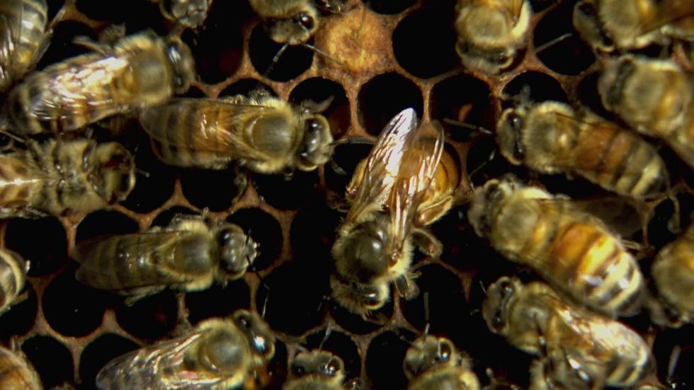 Queen Bees image