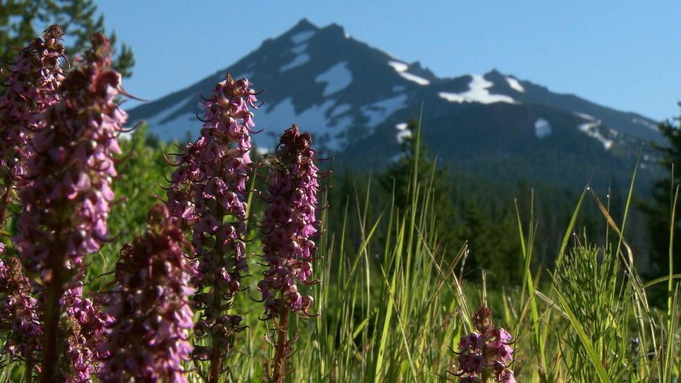 Celebrate Wilderness Photo Essay image