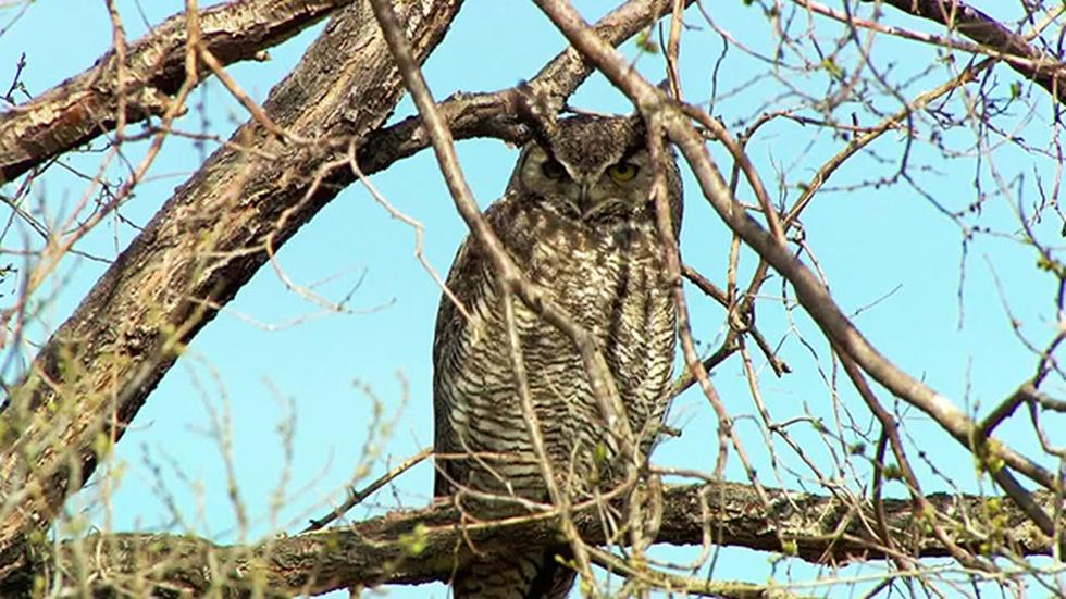 Malheur Wildlife Photo Essay image
