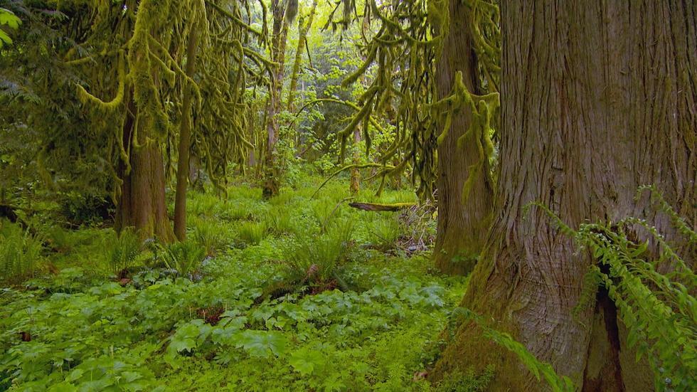 Hyla Woods image