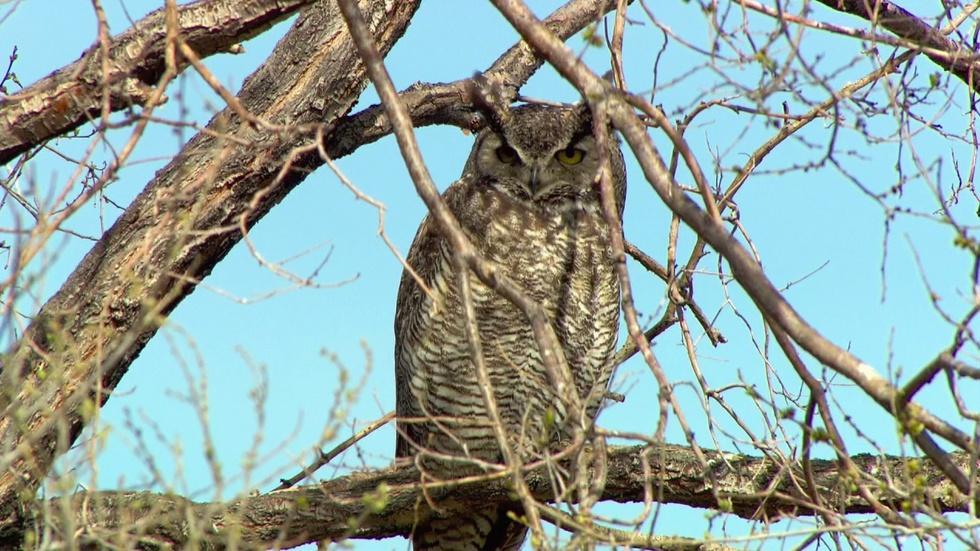 Who's Watching Oregon's Wildlife image