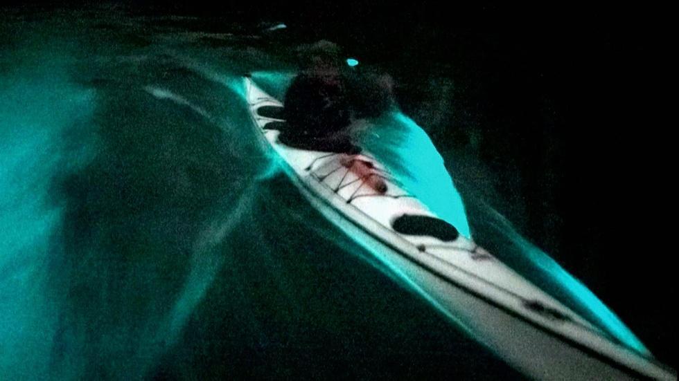 Bioluminescence image