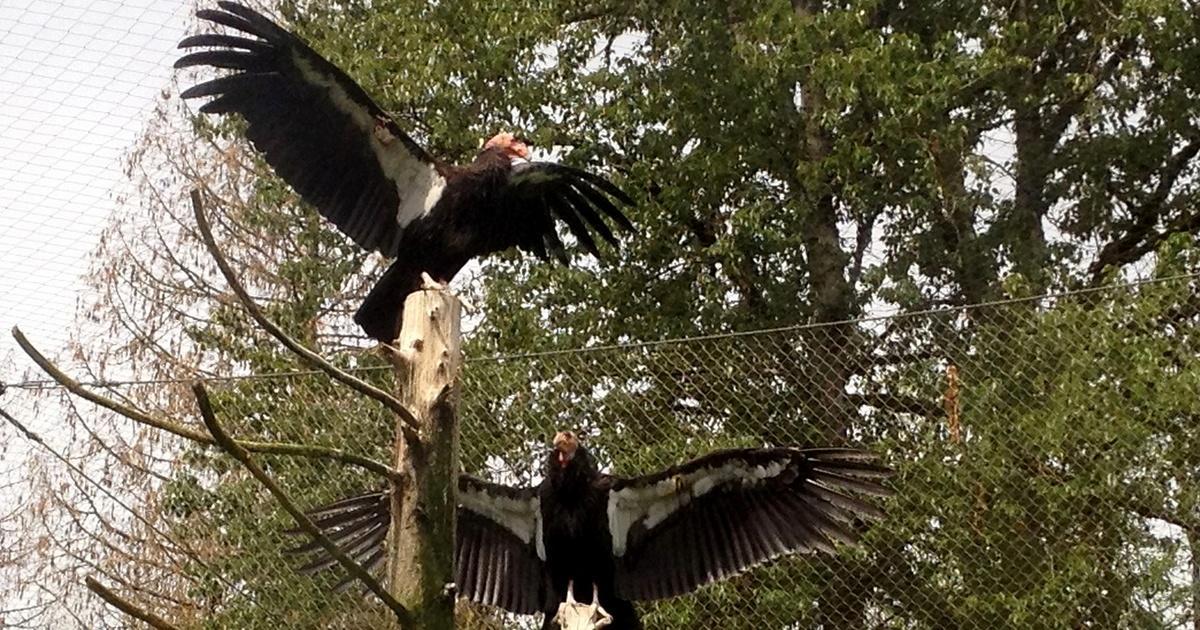 watch condor episode 7 online free