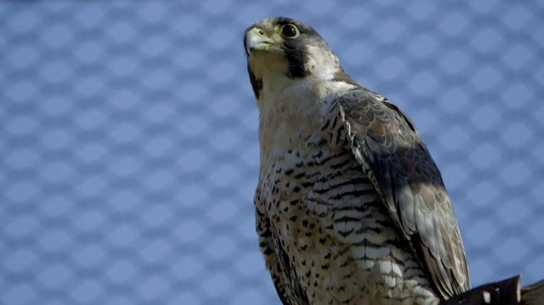 Animal R&R: Birds of Prey and The One-Eyed Possum