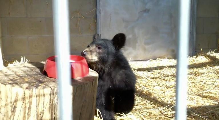 Animal R&R: Black Bears, An Osprey, and Bats