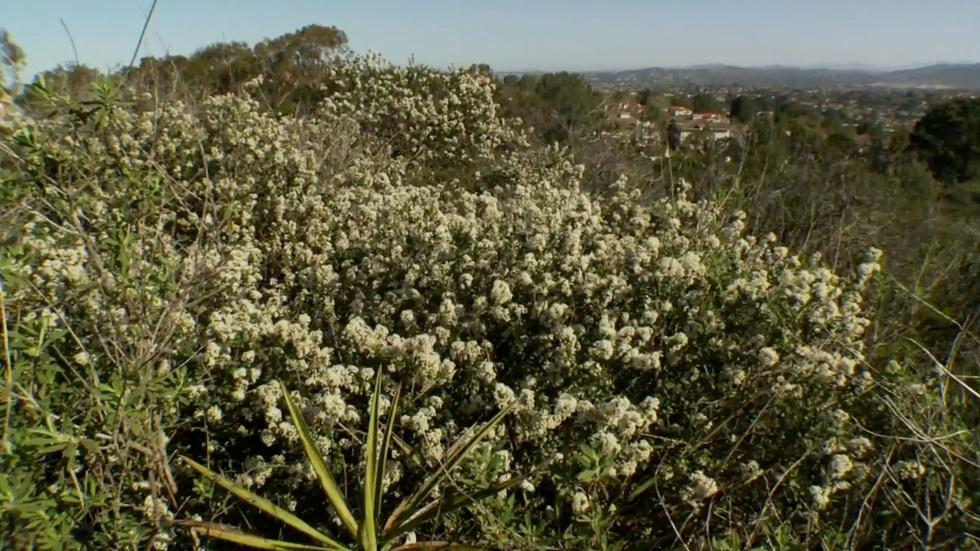 California Native Grown image