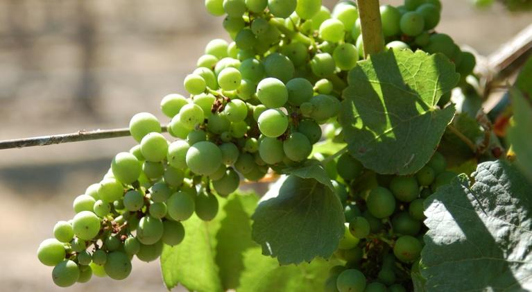 QUEST: Napa Wineries Face Global Warming