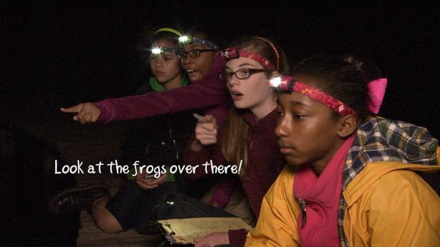Frog Whisperers - Data Collection - Country