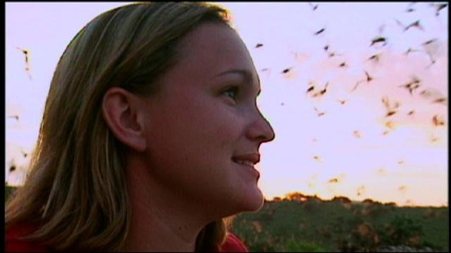 Scientist Profile: Bat Biologist