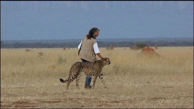 Scientist Profile: Cheetah Conservationist