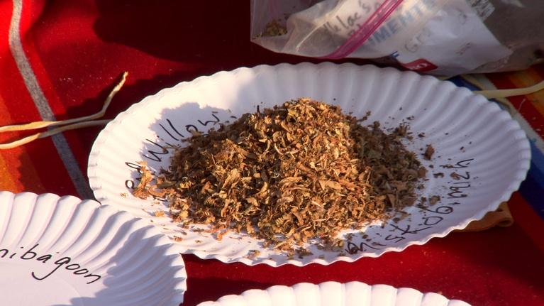Reclaiming Sacred Tobacco: Traditional Tobacco & Promoting Health