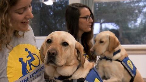 ViewFinder -- Healing Beyond Medicine Extra: Service Dog Training