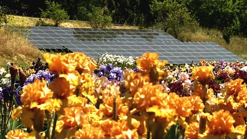 Clean Green Farm image