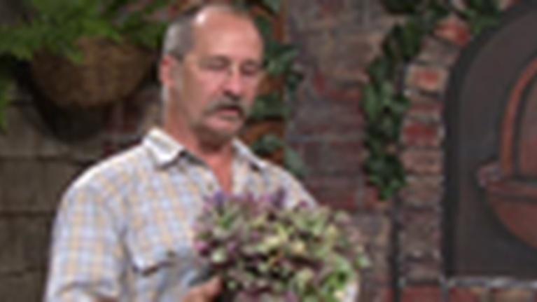 Art of Gardening: Leafminor on Citrus