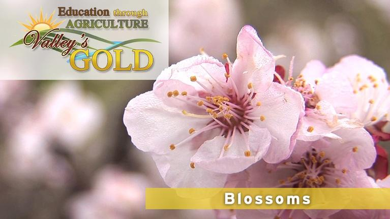 Valley's Gold Season 2: Education Through Agriculture: Blossoms and Pollination