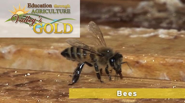 Valley's Gold Season 2: Education Through Agriculture - Bees